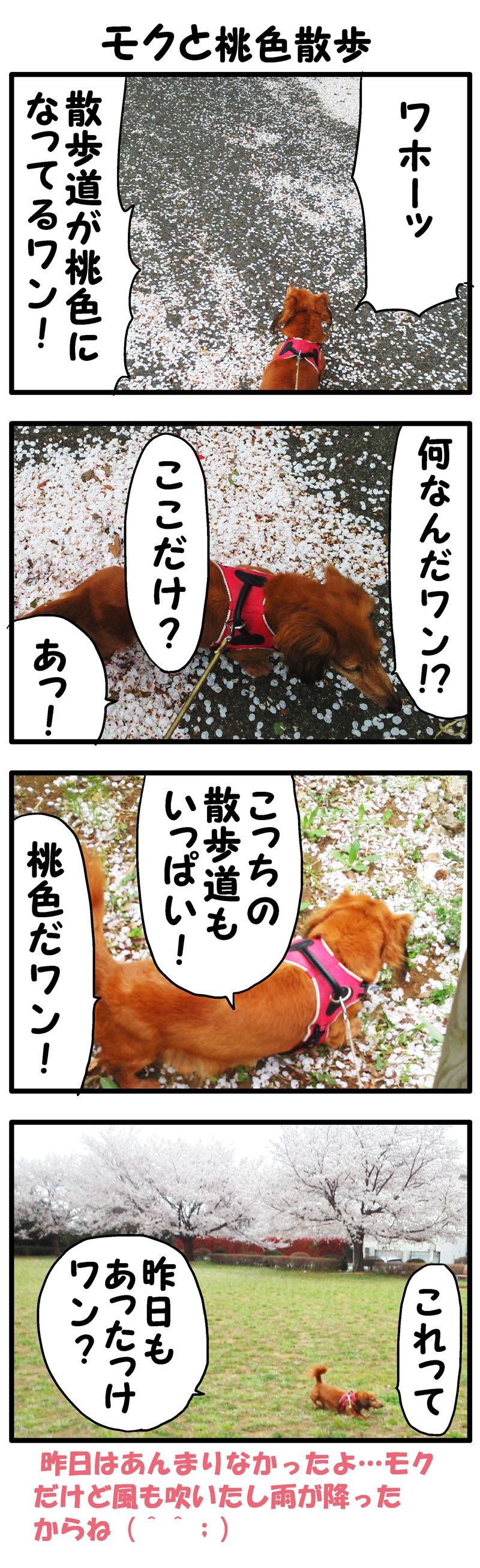モクとピンク道